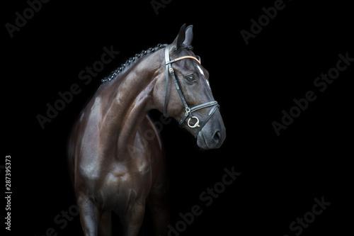 Fotografía  Black horse portrait on black background