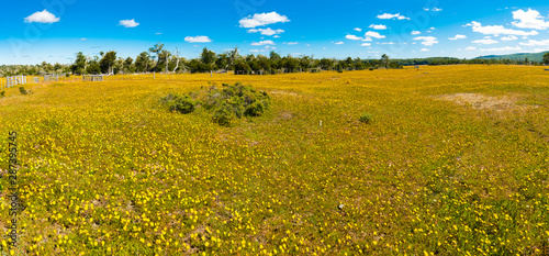 Blooming meadow of Tierra del Fuego
