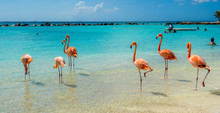 Pink Flamingo On The Beach Fro...