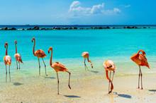 Pink Flamingo On The Beach From Aruba