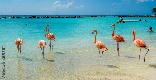 Pink flamingo on the beach from Aruba Wallpaper Mural