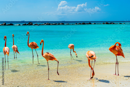 Canvas Prints Flamingo Pink flamingo on the beach from Aruba
