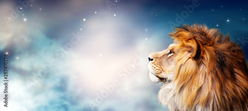 Fototapety, obrazy: African lion and night in Africa. Savannah moonlight landscape, king of animals. Portrait of proud dreaming fantasy leo in savanna looking forward on stars. Majestic dramatic spectacular starry sky.