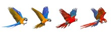 Colorful Set Of Macaw Parrot I...