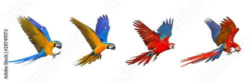 Recess Fitting Bird Colorful set of macaw parrot isolated on white background.