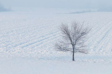 Fototapeta na wymiar Lonely tree standing on a field with snow Winter landscape.