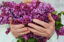 Elderly Woman Holding Beautiful Bouquet Of Lilacs. Old Lady With Wrinkled Arms, Clearly Visible Veins & Freckles Received A Bouquet As A Present For Mother's Day. Background, Close Up, Copy Space.