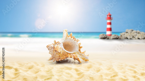 obraz dibond Muschel am strand mit Leuchtturm