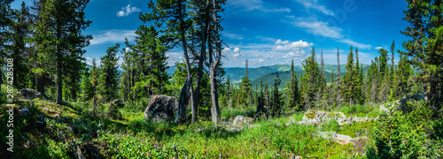 Garden Poster Road in forest Panoramic sunny summer view in taiga forest over sayan mountains, Ergaki national park, Krasnoyarsk region, Siberia, Russia