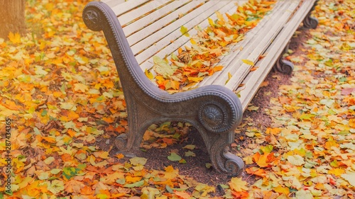 Fototapeta Yellow Fallen Leaves On Wooden Bench In Empty Park In Autumn Background Empty Bench In Autumn Landscape Fall Street Alley Concept Of