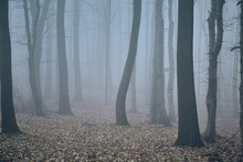 Foggy Forest In Late Autumn