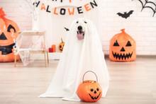 Swiss Shepherd Dog In Hallowee...
