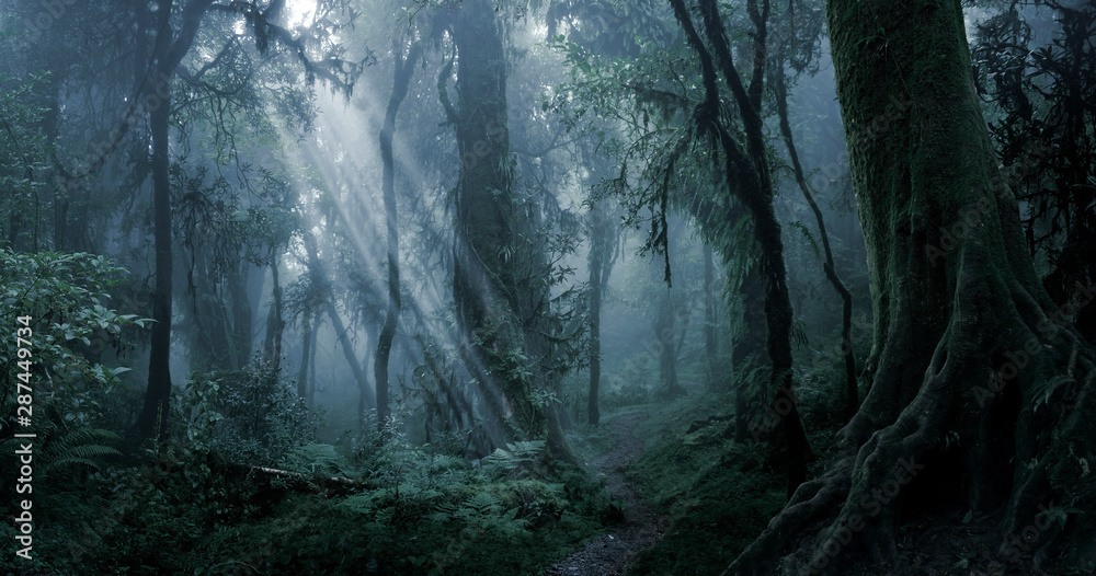 Fototapeta Deep tropical jungle in darkness