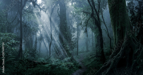 Fotobehang Zwart Deep tropical jungle in darkness