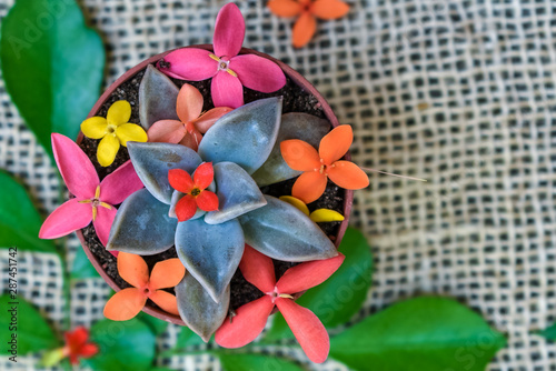 фотография Garden Myrtle bouquet with succulent on linen burlap cloth background