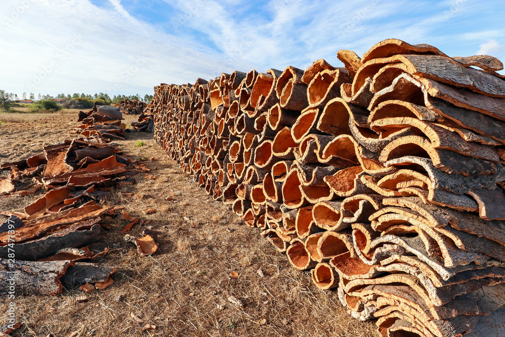 Obraz Harvested cork oak bark from the trunk of cork oak tree (Quercus suber) for industrial production of wine cork stopper in the Alentejo region, Portugal fototapeta, plakat