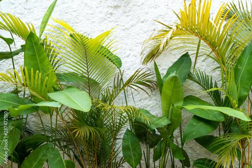 zamyka-up-zielona-lisc-tekstura-tropikalne-rosliny-na-biel-sciany-tle-tla-koncepcja-srodowisko-botaniczny-ogrod-zdrowy-swiezosc