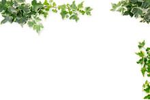 Botanical Frame : Ivy On A White Background.