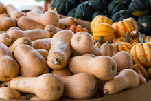 A Crop Of Squash Varieties For...