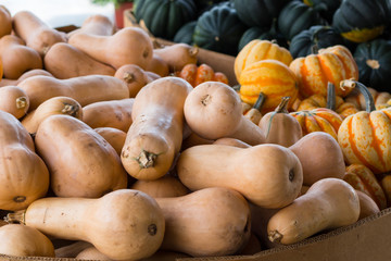 A crop of squash varieties for sale in a market, including butternut, acorn, carnival, and fairytale.