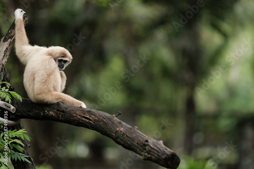 Fototapeta Close up Monkey  obraz