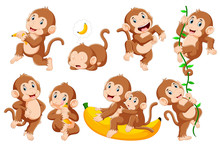 Collection Of Monkey In Differ...