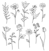 Hand Drawn Flowers. Set Of Ske...