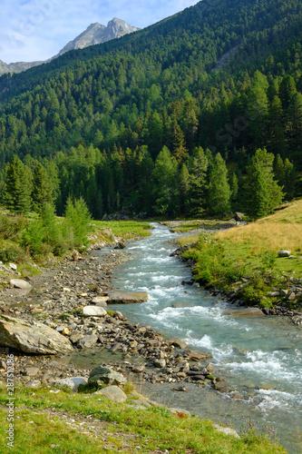 Fototapety, obrazy: stone pine forest in the valley defereggental, east tyrol, austria, pinus cembra