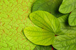 Leinwanddruck Bild - Happy Dussehra greeting card , green leaf and rice