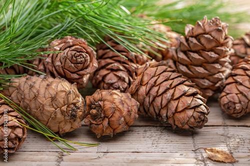 Fototapeta  Cones and branches of Siberian cedar pine