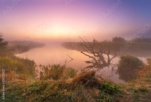 Fotografia  Old fallen dry oak laying in water towards sunrise