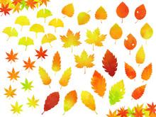 色々な紅葉した葉のイラストセット(水彩風)