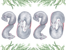 Watercolor Hand Drawn Illustration Top View With Cute Sleeping Gray Mouse (rat)  As Number 2020, Chinese Symbol Of New Year, Isolaterd On White Background.