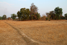 Rice Fields On Khone Island (laos)