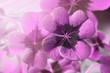 Leinwanddruck Bild - Image of lucky clover in a flowerpot