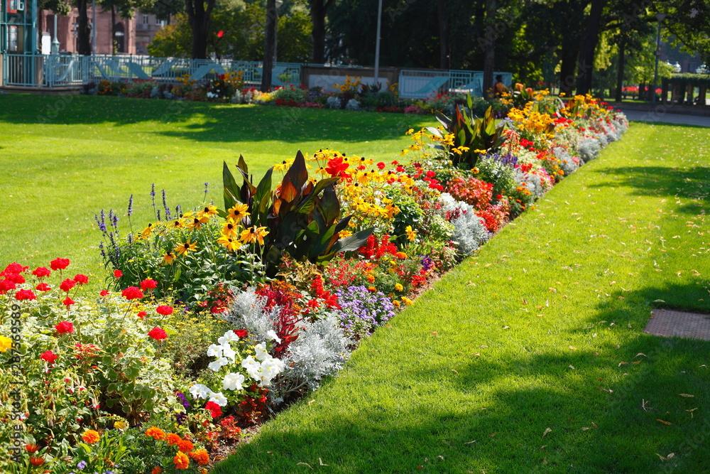 Fototapety, obrazy: Blühende bunte Sommerblumen, Blumenbeet an einer Rasenfläche