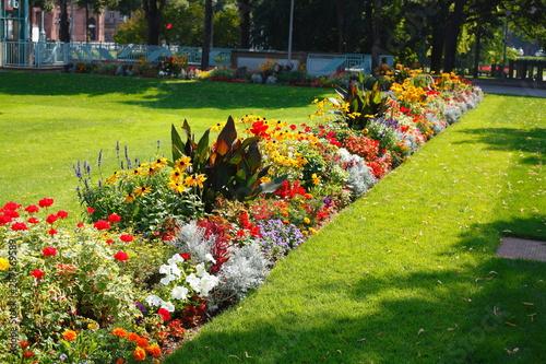 Fotografie, Obraz  Blühende bunte Sommerblumen, Blumenbeet an einer Rasenfläche
