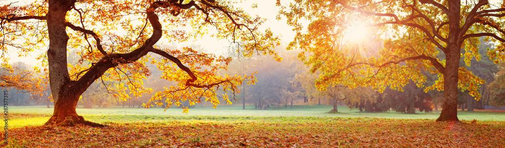 Fototapeta trees in the park in autumn on sunny day