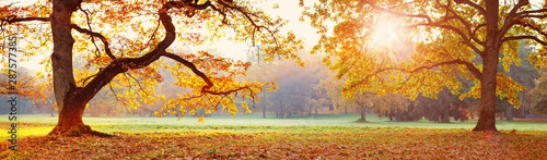 Fototapeta trees in the park in autumn on sunny day obraz