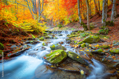 Poster Forest river Autumn landscape - river waterfall in colorful autumn forest park with yellow red leaves