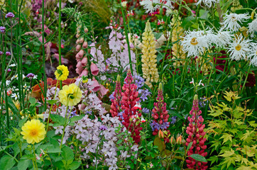 Panel Szklany Ogrody A colourful flower border with wild planting of mixed flowers including Lupins and Leucanthemum Shasta daisy