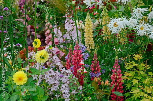 A colourful flower border with wild planting of mixed flowers including Lupins a Canvas Print