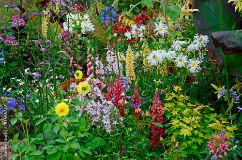 Photo A colourful flower border with wild planting of mixed flowers including Lupins a