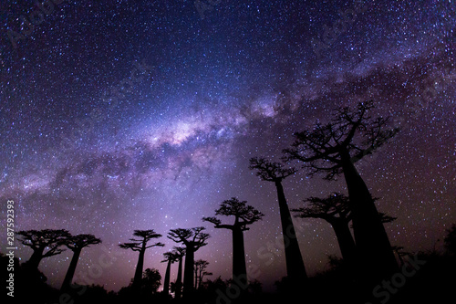 Baobab Milky Way at Avenue of the Baobabs