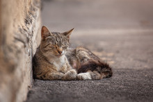 Street Homeless Cat Resting Ag...