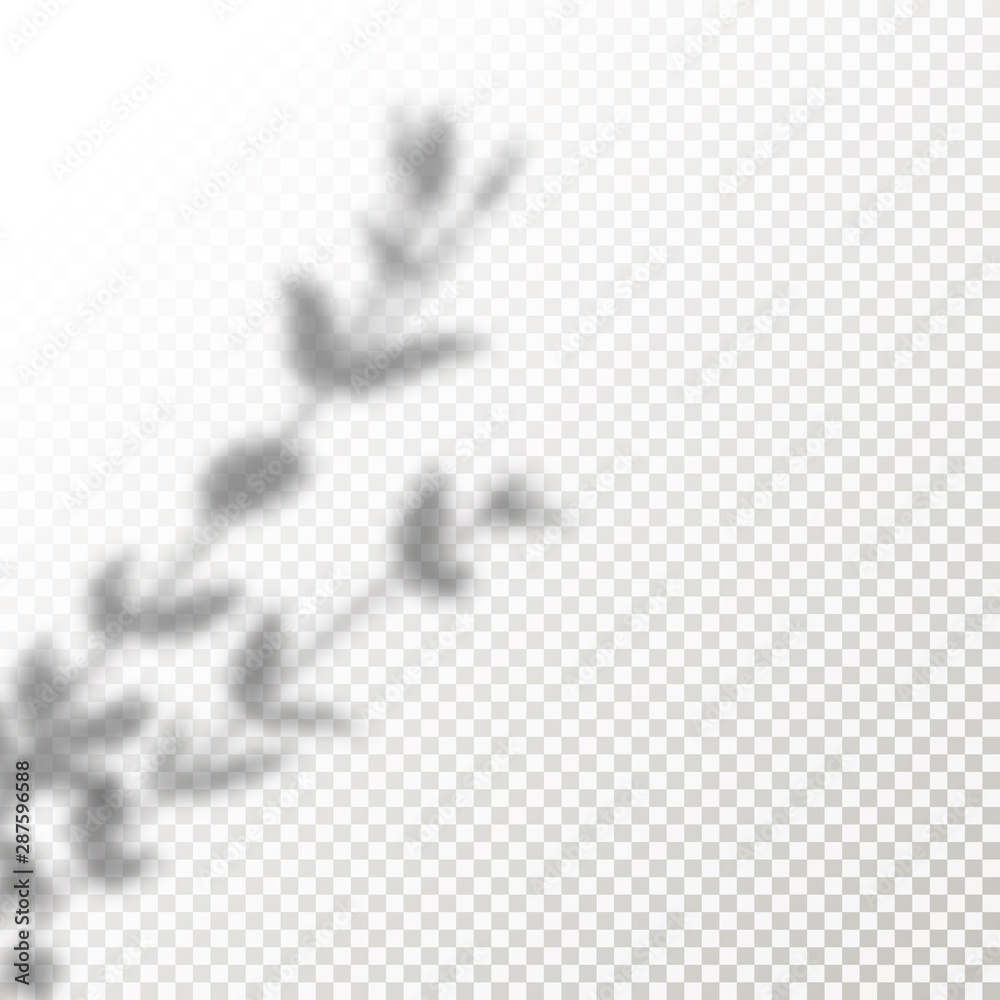 Fototapeta Shadow Overlay leaves Vector Mockup. Transparent Shadows overlay effects Of A Plant in a modern minimalist style.