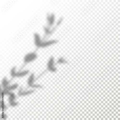 Shadow Overlay leaves Vector Mockup. Transparent Shadows overlay effects Of A Plant in a modern minimalist style.