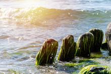 Old Wooden Posts Overgrown Sea...