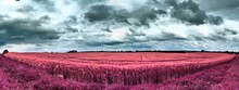 Beautiful Pink And Purple Infr...