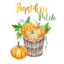 Watercolor Autumn Clipart With Hand Painted Orange Pumkins In A Wood Bushel Basket, Isolated On White Background. Fall Harvest Decor, Pumpkin Patch Illustration For Thanksgiving Greetings.